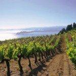 Wine-Tour-Grecia-Macedonia-Le Vie del Gusto-Percorsi Enogastronomici-Arché-Travel-Tour Operator